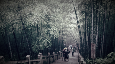 we stumbled into the bamboo forest
