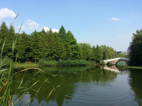 Pond area in ZJU